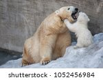 polar bear mother and her child. | Shutterstock . vector #1052456984
