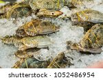 a crab laying on ice cold is on ... | Shutterstock . vector #1052486954