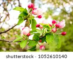 spring nature background with... | Shutterstock . vector #1052610140