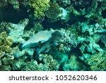 beautiful underwater world of... | Shutterstock . vector #1052620346