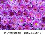 floral background of blue... | Shutterstock . vector #1052621543