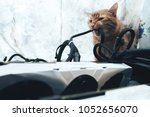 Stock photo ginger cat tries to bite the wires on mining computer open stand 1052656070