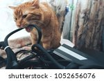 Stock photo ginger cat tries to bite the wires on mining computer open stand 1052656076