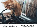 ginger cat tries to bite the... | Shutterstock . vector #1052656088
