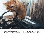 Stock photo ginger cat tries to bite the wires on mining computer open stand 1052656100