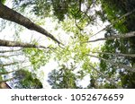 several trees in the middle of... | Shutterstock . vector #1052676659