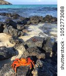 Small photo of Bright orange Galapagos crab in the foreground, atop craggy, sandy rocks, with turquoise water in the background all the way to the horizon