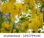 close up detail of branches... | Shutterstock . vector #1052799140