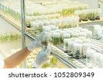 blurred hand working in life... | Shutterstock . vector #1052809349