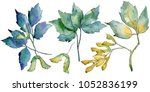 maple leaves in a watercolor... | Shutterstock . vector #1052836199
