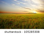 field with green grass and red... | Shutterstock . vector #105285308