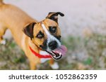 a happy dog is watching and... | Shutterstock . vector #1052862359