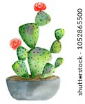 potted cactus  watercolor... | Shutterstock . vector #1052865500