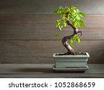Miniature Bonsai Tree Chinese...