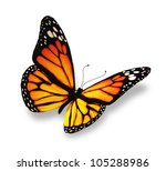 Stock photo yellow orange butterfly isolated on white background 105288986