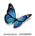 Stock photo blue butterfly isolated on white background 105288989