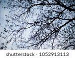 tree silhouette sunset on... | Shutterstock . vector #1052913113