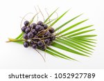 acai fruit on a white... | Shutterstock . vector #1052927789