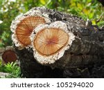 A Pile Of Cork Oak In The...