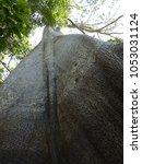 sama ma tree   ceiba pentandra ... | Shutterstock . vector #1053031124
