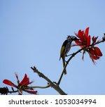 dainty chirpy  little ... | Shutterstock . vector #1053034994