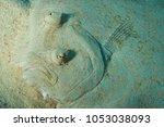 closeup of a peacock flounder ...   Shutterstock . vector #1053038093