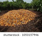 close up outdoor view of many...   Shutterstock . vector #1053157946