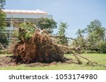Small photo of Darwin,Northern Territory/Australia-March 18,2018: Fallen tree aftermath from Cyclone Marcus with government buildings in the city of Darwin, Australia