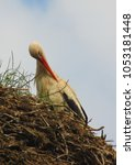Small photo of SCHAFFLUND, SCHLESWIG-HOLSTEIN, GERMANY - JUNE 10, 2011: A stork sat upon its nest, at the aptly named Storks Nest zimmer, in the village of Schafflund near Flensburg.