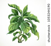 decorative tropical tree ficus... | Shutterstock .eps vector #1053244190