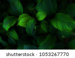 Ornamental Leaves In Green And...