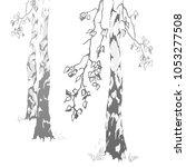 trunks of birches illustration | Shutterstock .eps vector #1053277508