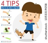 what to do after a dog bite...   Shutterstock .eps vector #1053319058