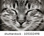 Stock photo closeup of sleeping cat face black and white 105332498