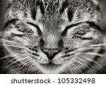 Closeup Of Sleeping Cat Face  ...