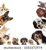 Stock photo set of pets 1053372974