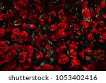artificial red rose background | Shutterstock . vector #1053402416