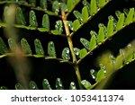 waterdrops on a leaf   Shutterstock . vector #1053411374