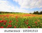 Tuscany  Italy. Poppies Field