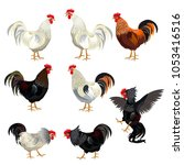 Rooster Set. Vector...