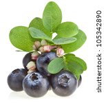 Fresh Berry Blueberry With...