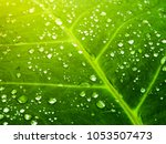 lush green leaf with water... | Shutterstock . vector #1053507473