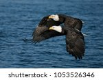 Two Bald Eagles Flying Side By...