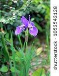 Small photo of Calamus of flowers