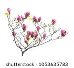magnolia flower spring branch... | Shutterstock . vector #1053635783