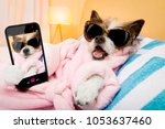 Stock photo cool funny poodle dog resting and relaxing in spa wellness salon center wearing a bathrobe and 1053637460