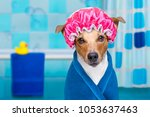 jack russell dog  in a bathtub... | Shutterstock . vector #1053637463