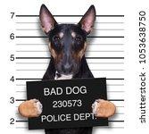 criminal mugshot  of pitbull... | Shutterstock . vector #1053638750