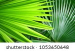 Small photo of Green color palm leaves with topical stly background