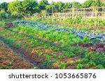 organic vegetable garden future ... | Shutterstock . vector #1053665876